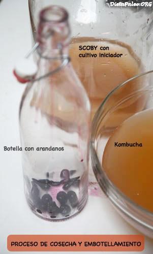 kombucha-preparacion
